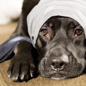 Hunde Operation