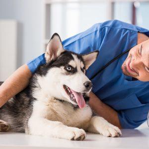 Agila Hundeverischerung