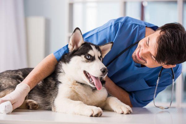 Hunde-Kastration-Sterilisation