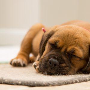 hundenamen rüde