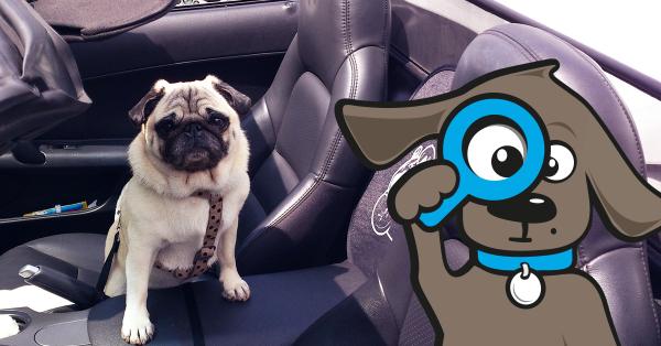 Hund Autofahren