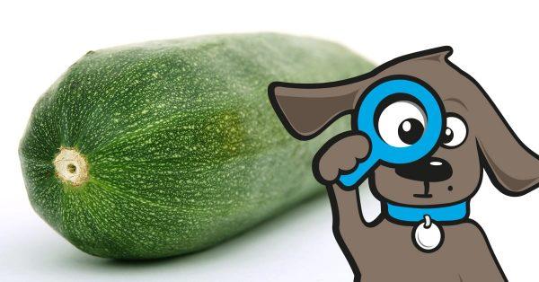 Dürfen Hunde Zucchini Essen?